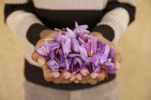 morocco saffron